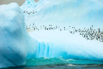 Penguins on South Orkney Island, Antartica.