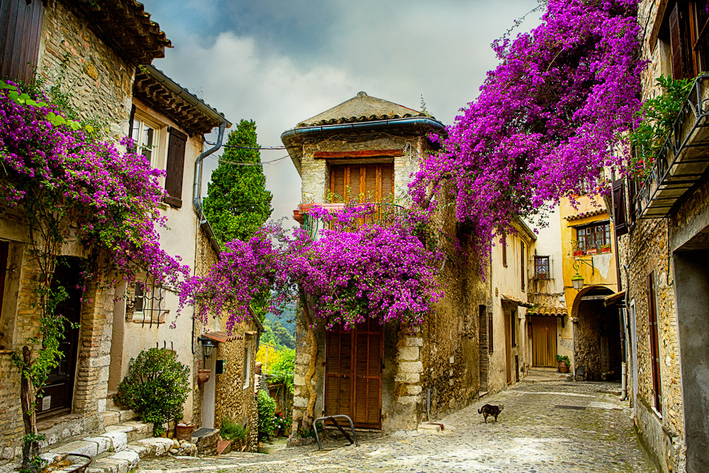 Provence 1 of 22