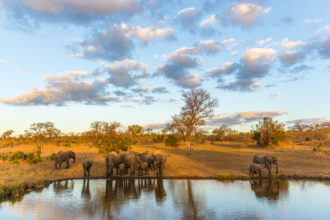 Africa was voted the best destination to see wildlife in International Traveller's Readers' Choice Awards 2015.