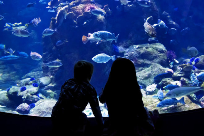 Singapore is home to the world's largest fresh water aquarium, River Safari 9.