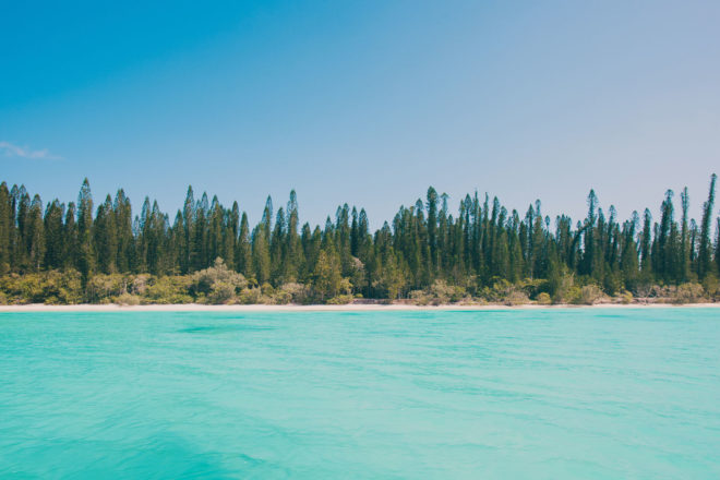 The famed pine trees on the Isle of Pines, New Caledonia.