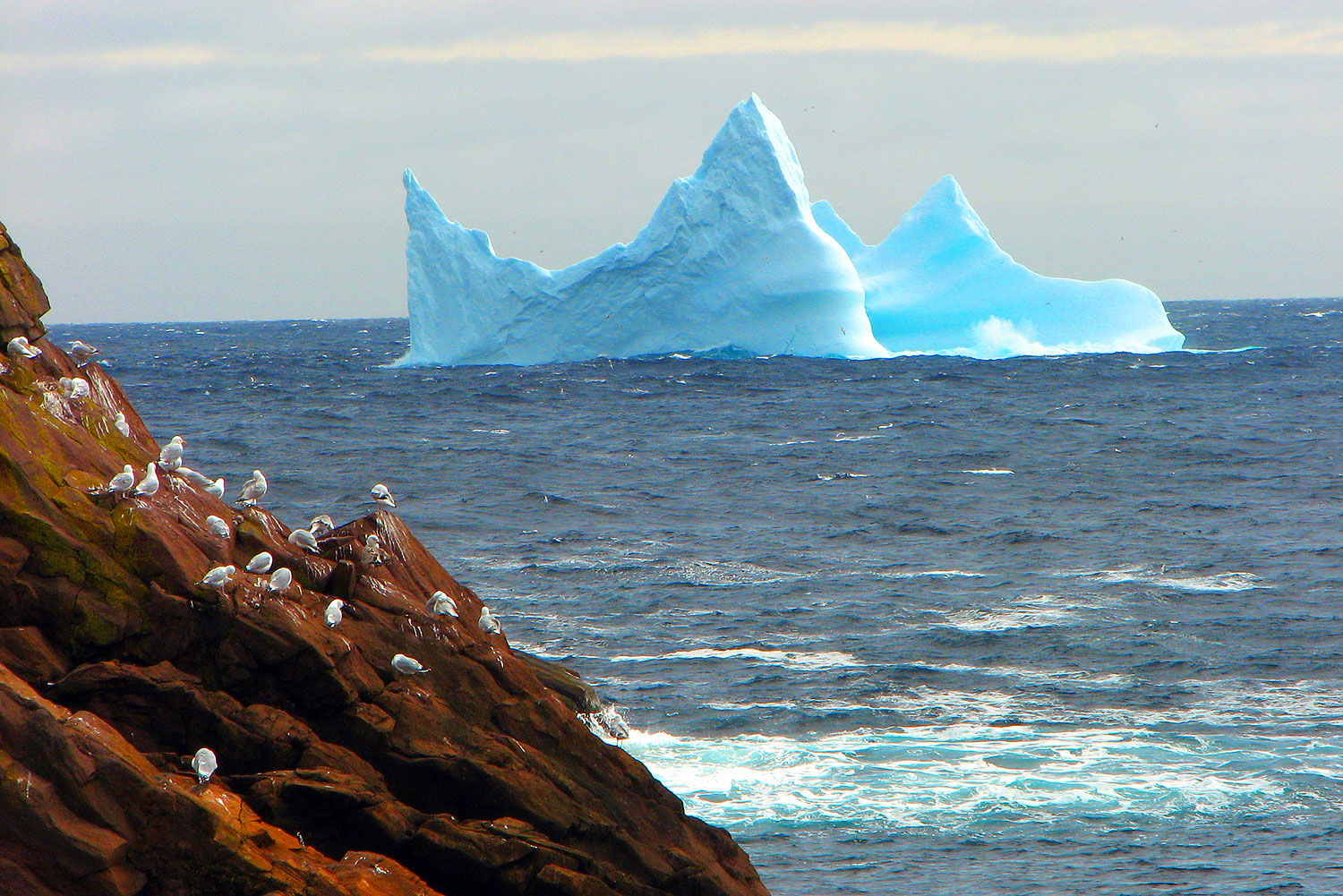An iceberg from a northern glacier floats down the Newfoundland coast.