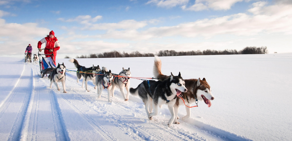 Try dog-sledding with huskies through Norway
