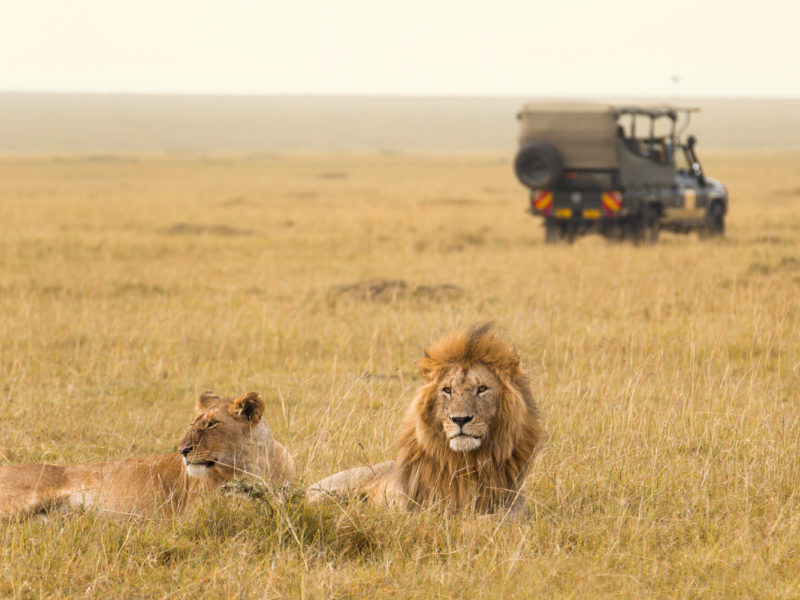 World's best animals encounters.