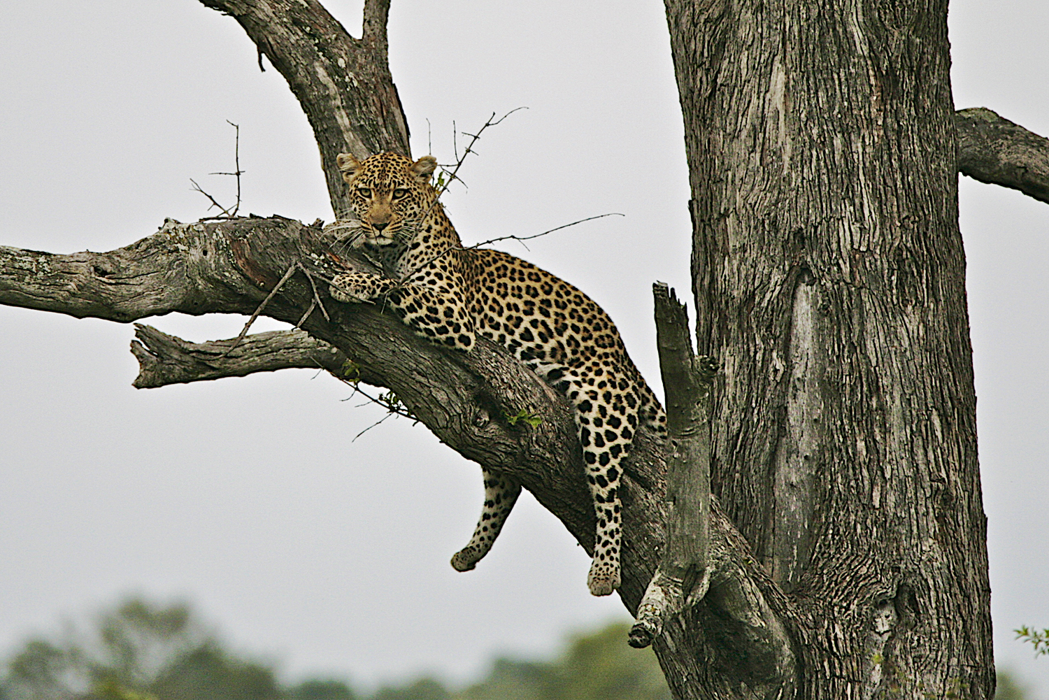 How to choose best African safari.