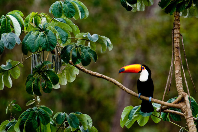 The Amazon Rainforest, ranked #5 in our countdown of '100 Ultimate Travel Experiences of a Lifetime'.