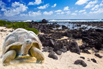 The Galápagos Islands, ranked #4 in our countdown of '100 Ultimate Travel Experiences of a Lifetime'.