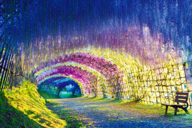 Japan's breathtakingly beautiful Wisteria Tunnel in Kitakyushu.