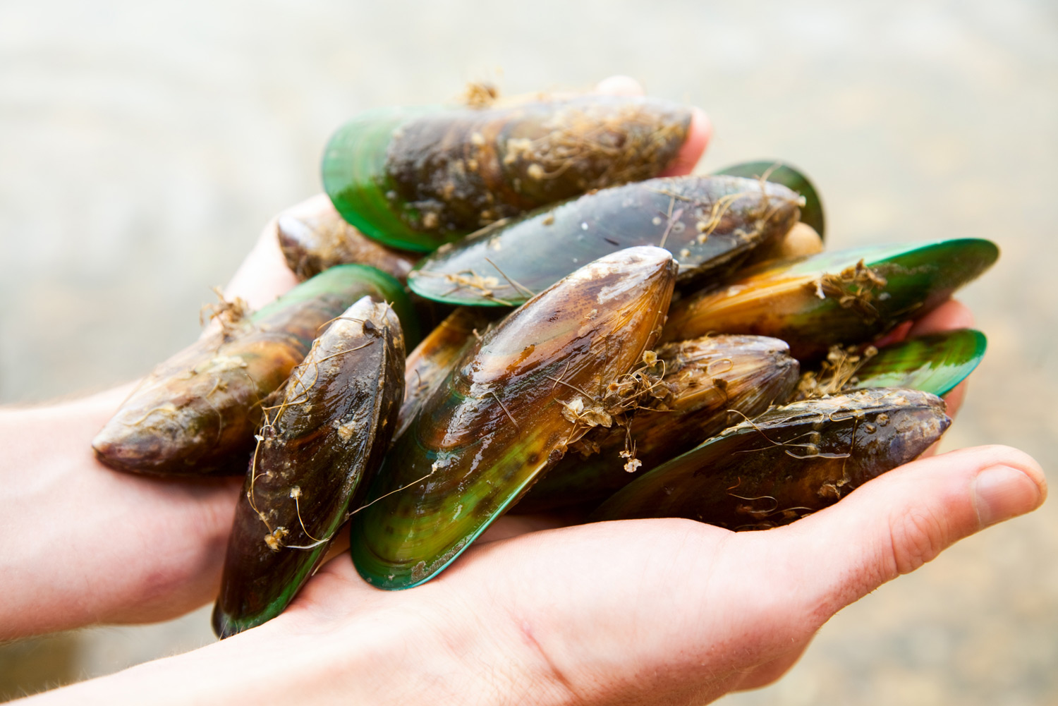 Anyone can snorkel and catch fresh clams, crayfish and paua of the Marlborough coast.