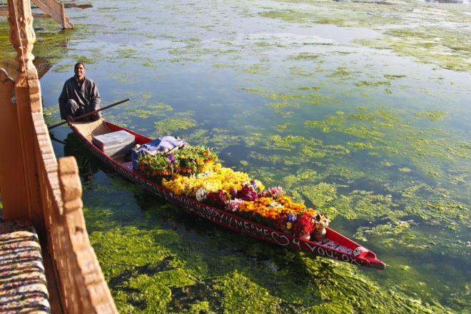 A flower seller on Kashmir's Nagin Lake.