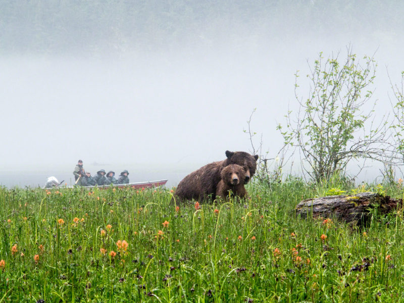 Great Bear Lodge, Canada.