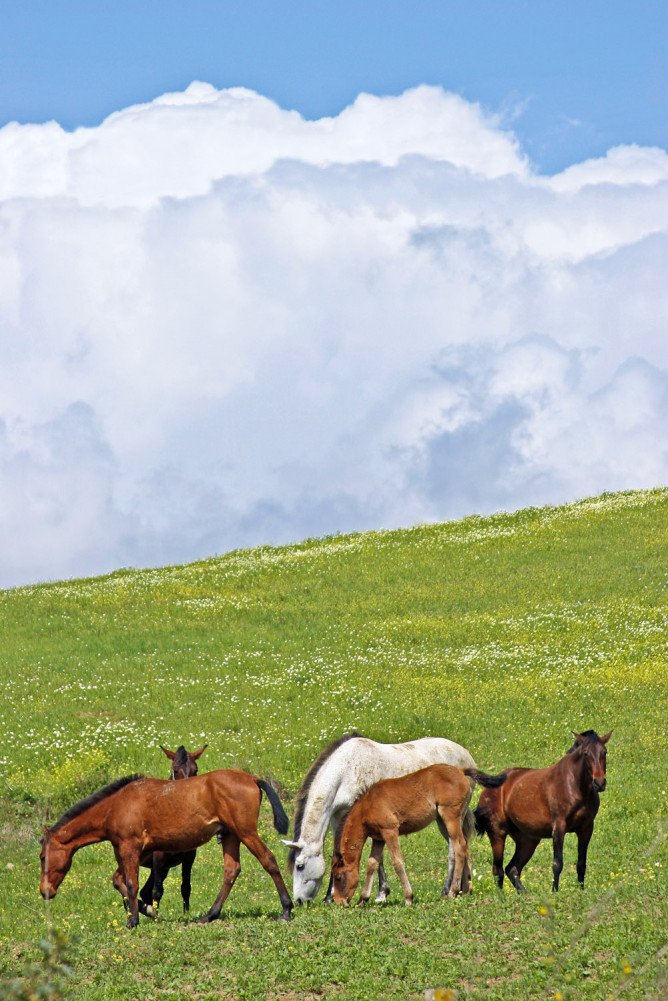 The Andalucían Mountains region has a unique equine tradition.