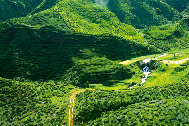 A verdant green, the Cameron Highlands north of Kuala Lumpur is a place of fantastical beauty.