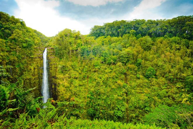 'Akaka Falls on the Big Island, Hawai'i.