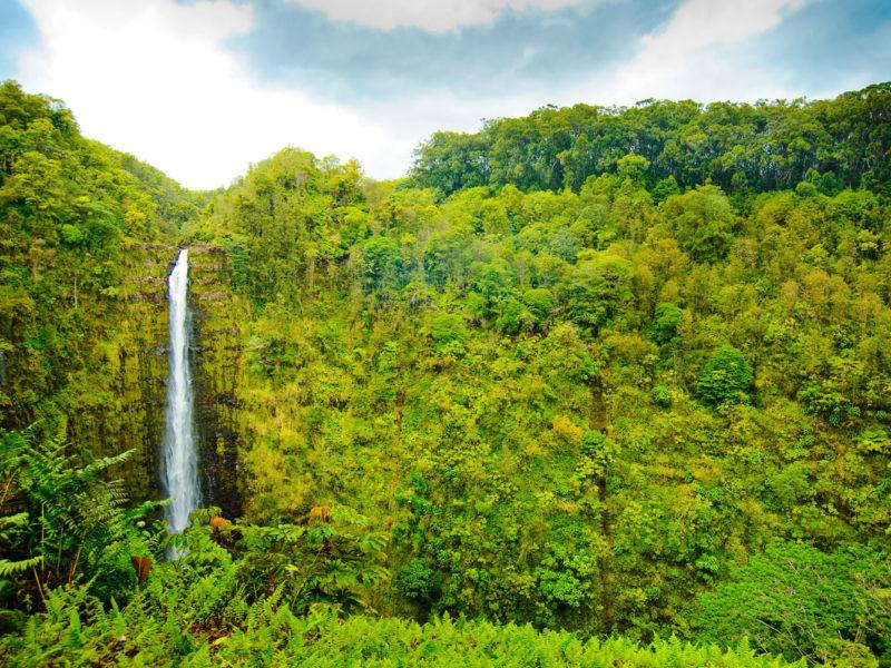 'Akaka Falls on the Big Island, Hawai'i.