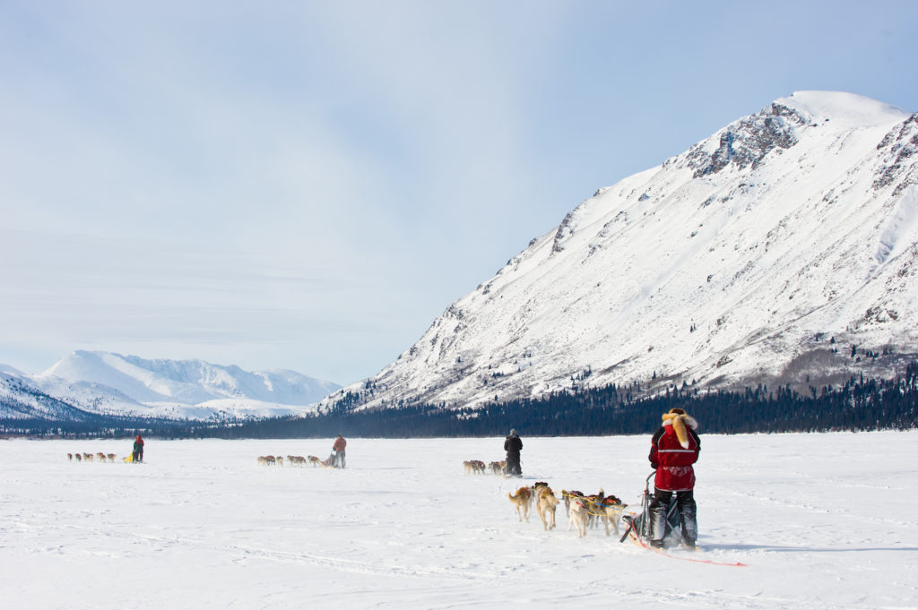 Mushing on in the Yukon