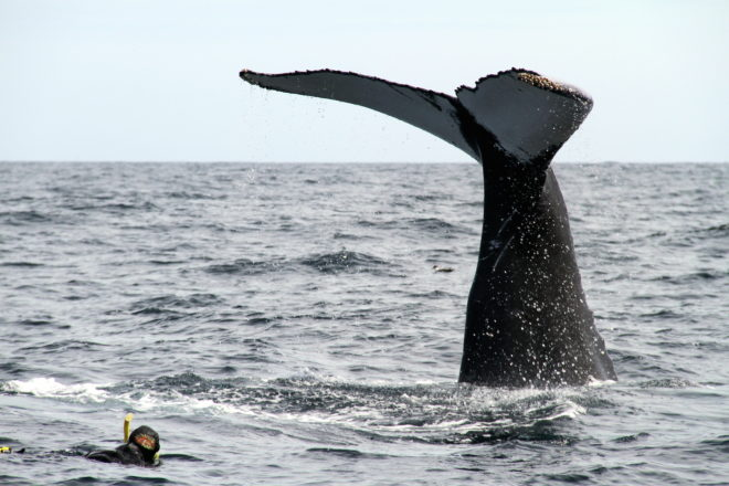 The whale tail