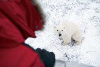 Tundra Buggy polar bear experience in Canada.