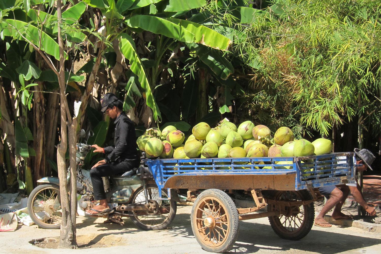 Coconut vendor in Barbodos.