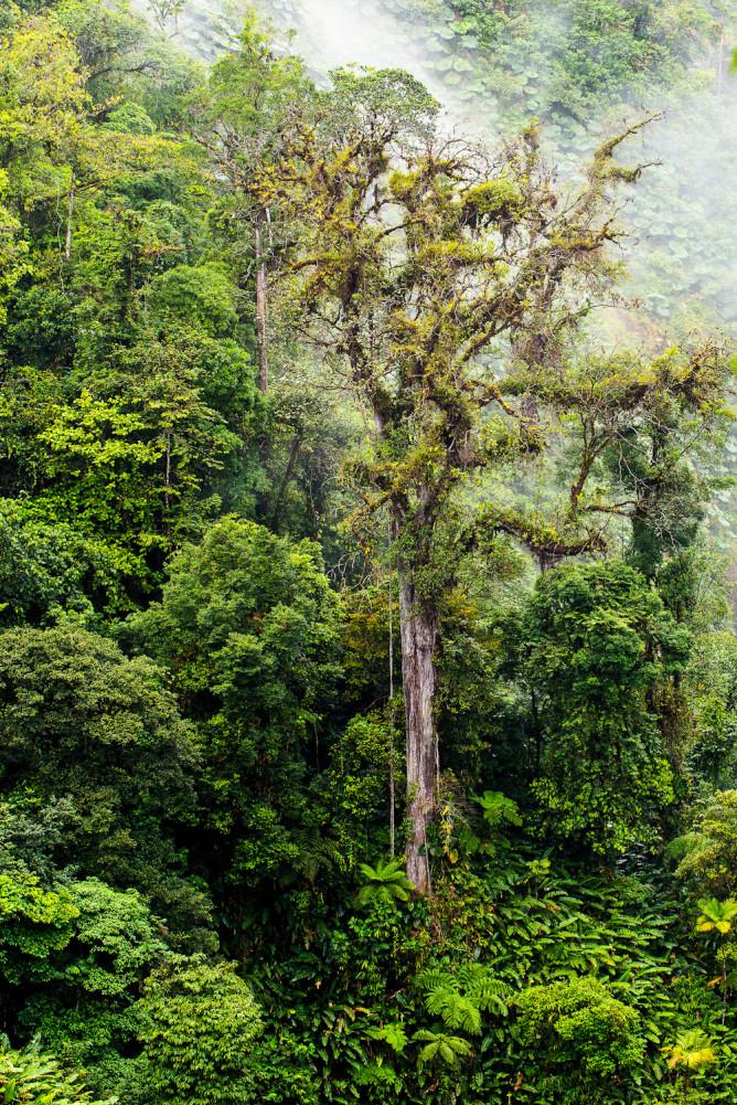 Costa Rica - the Garden of Eden - International Traveller
