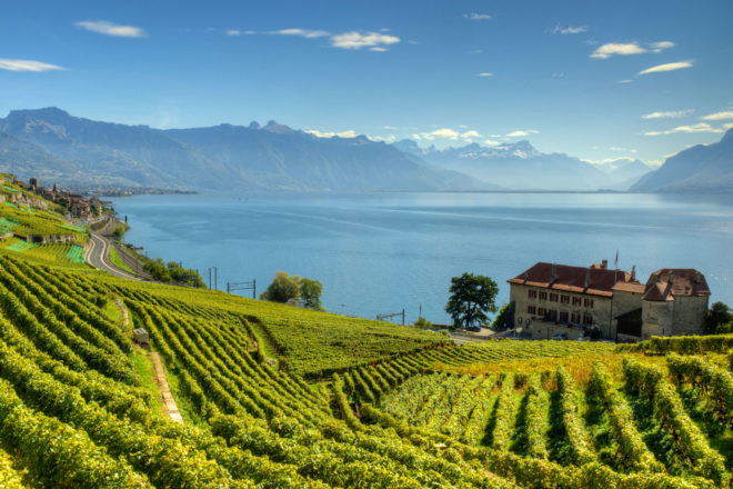 Lavaux Vineyard Terraces in Switzerland.