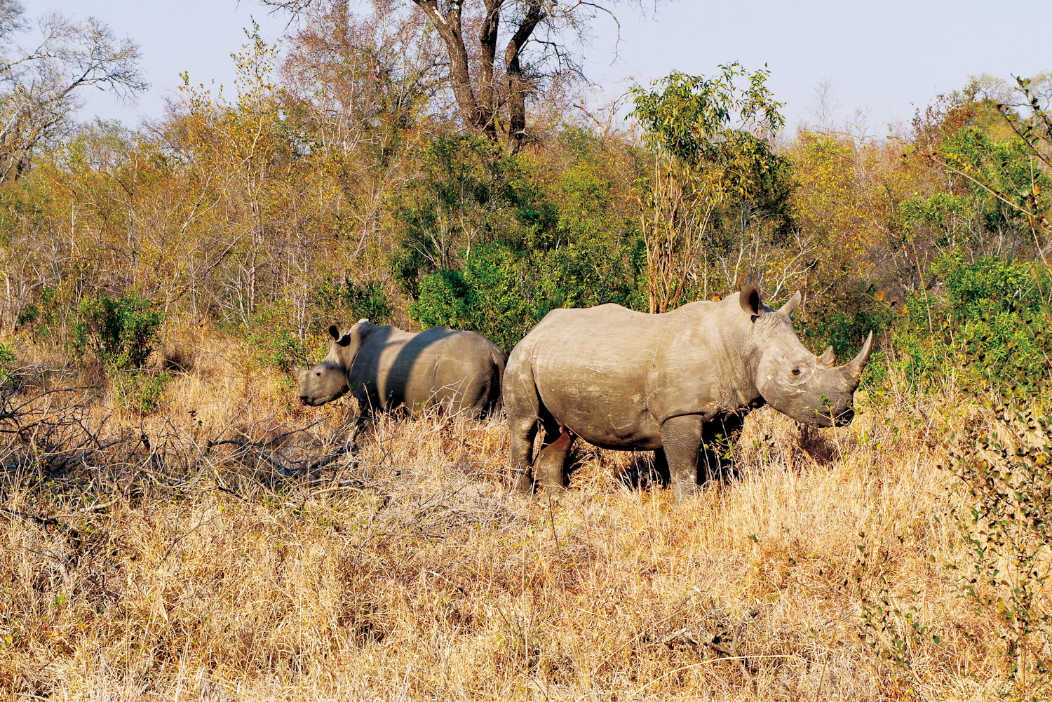 Rhinos Without Borders with andBeyond and Great Plains Conservation