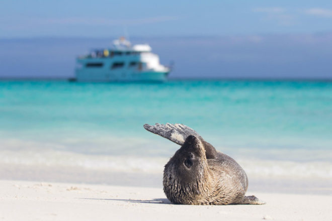 Sea lion in the Galapagos Islands.
