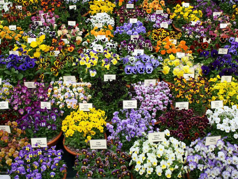 Chelsea Flower Show in London, England
