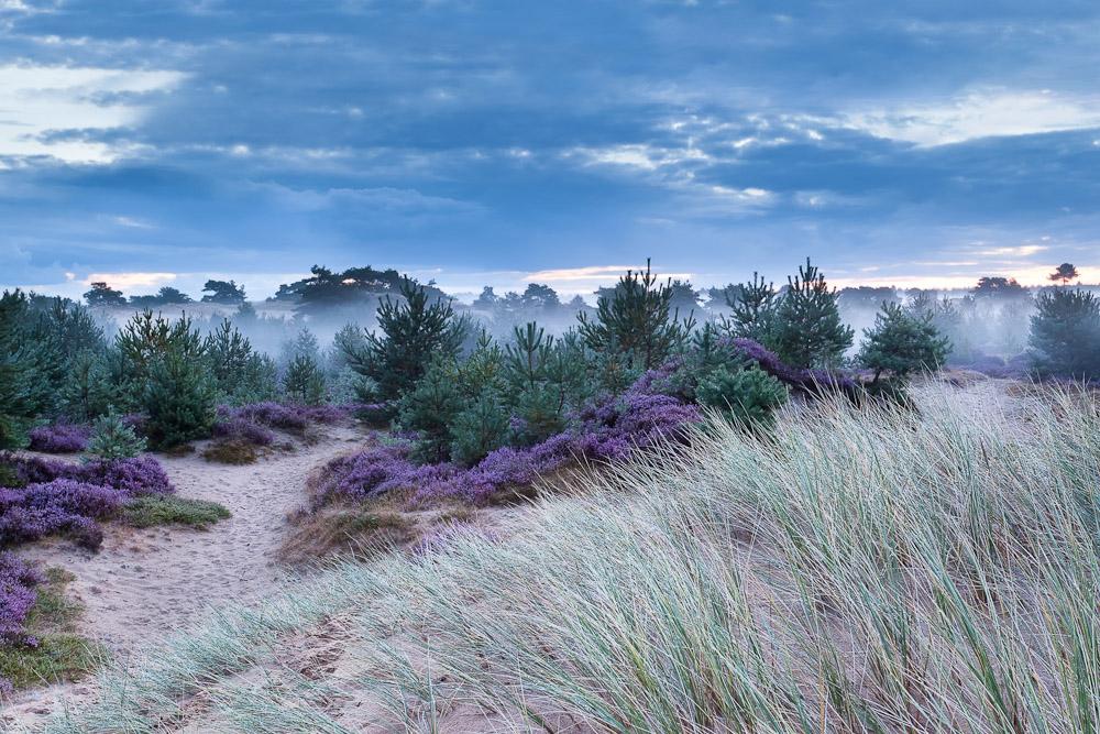 Drenthe, Netherlands sand dunes