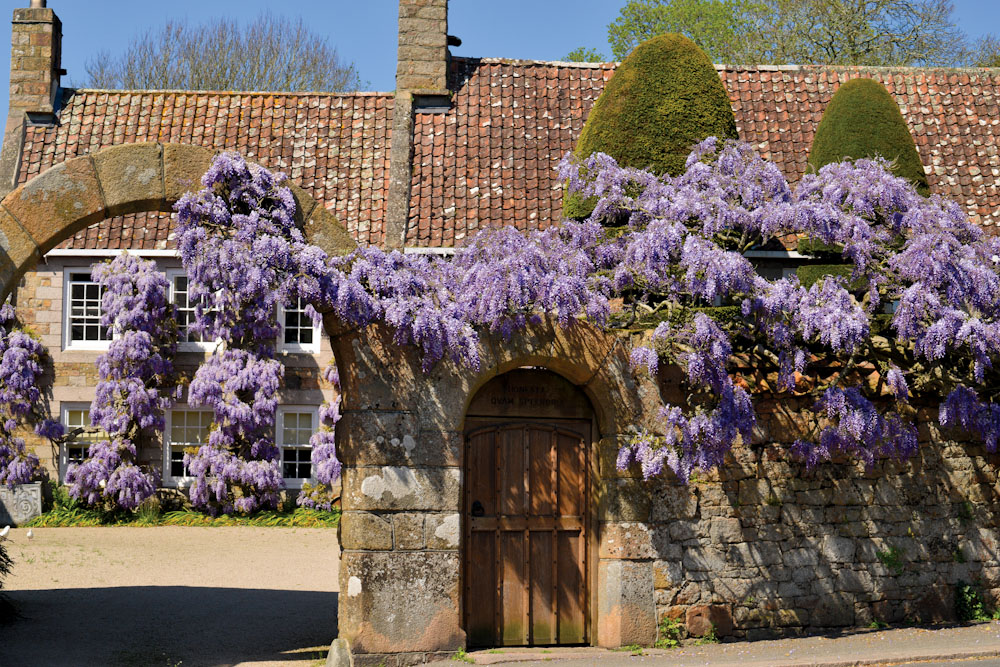 Wisteria Jersey, United Kingdon 100 secret gems Jersey