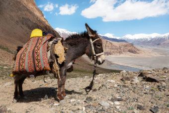 Donkey time Tajikistan