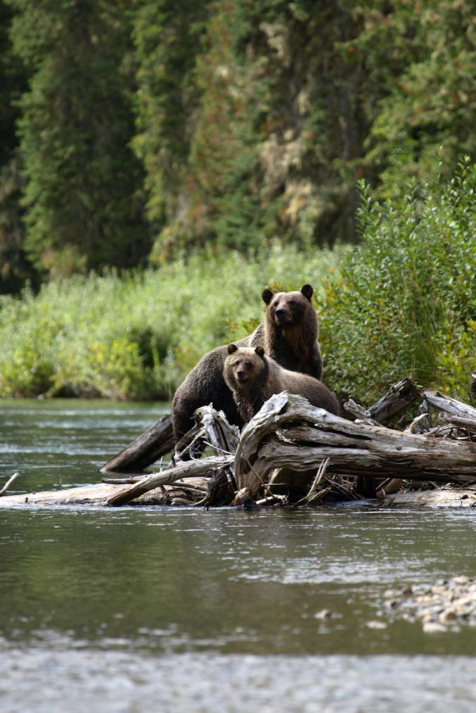 mitchell river cariboo mountains bear whisperer tours Ecotours BC