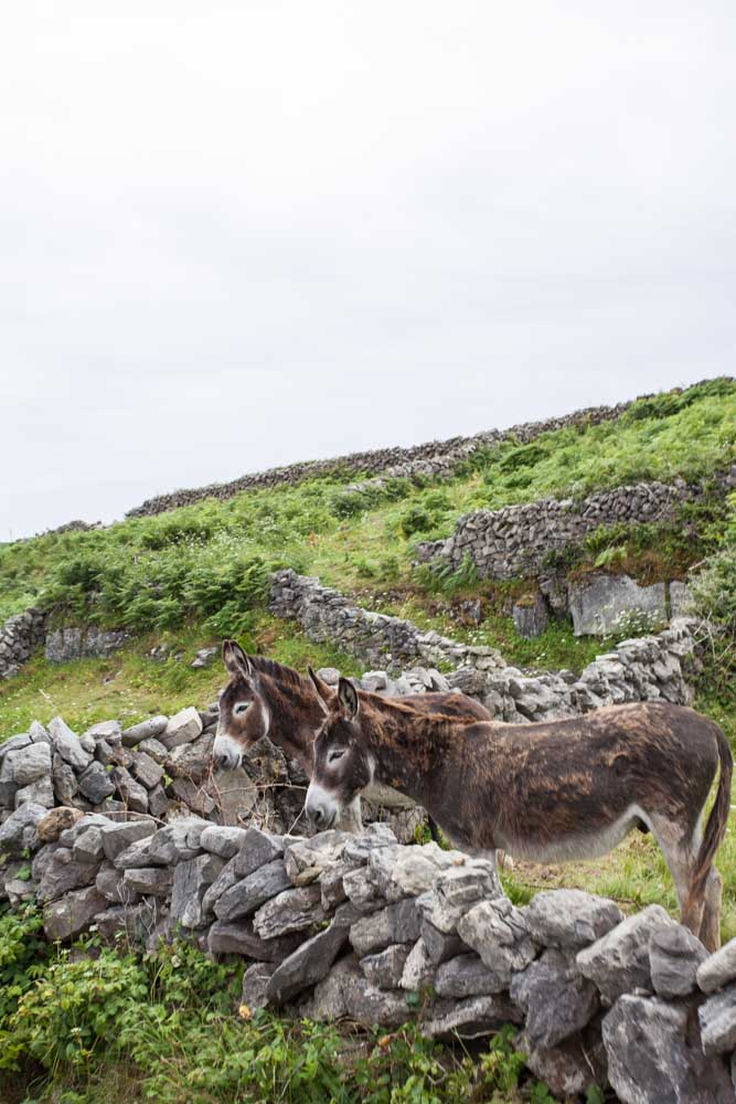 livestock farm donkeys ireland island