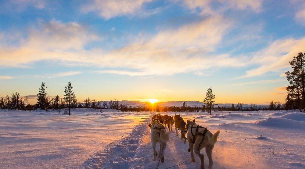 Dog sledding Churchill Canada