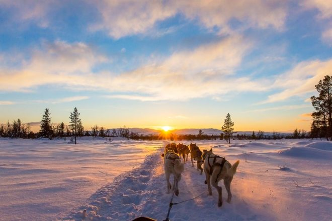 Dog sledding Churchill Canada