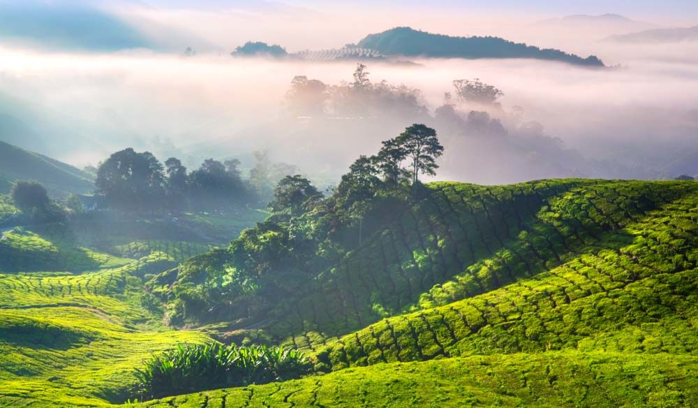 Tes highlands view Malaysia