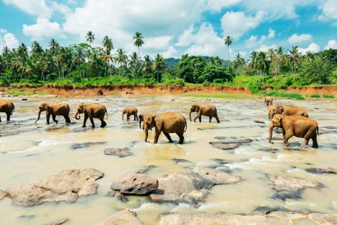 wildlife elephants nature sri lanka