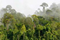 Malaysia Asia Rainforest Wildlife