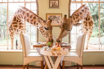 Giraffe Manor Rothschild Nairobi
