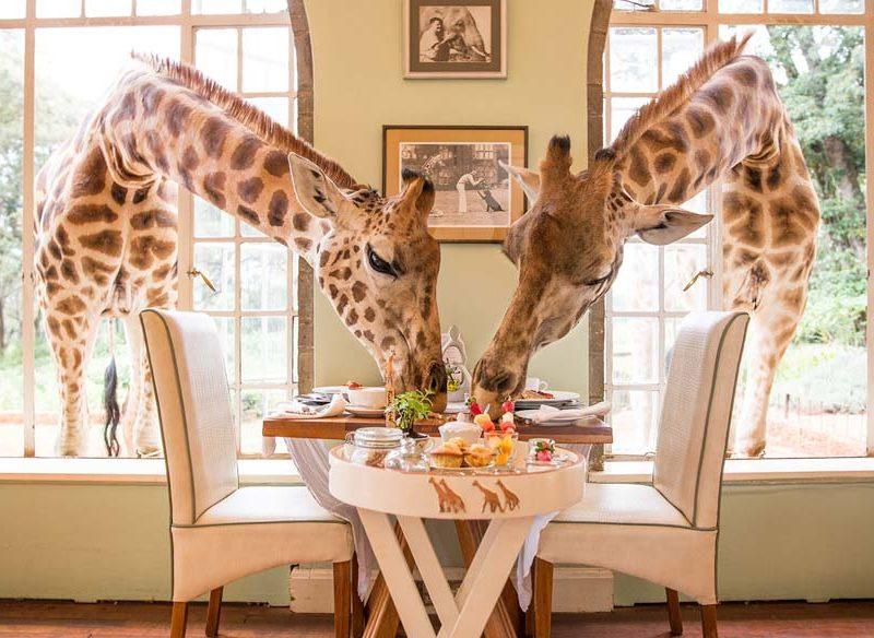 Giraffe Manor Rothschild Nairobi