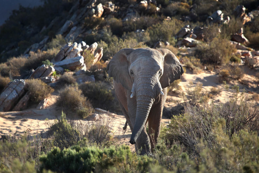 african safari animals nature lions zebras elephants game tours see