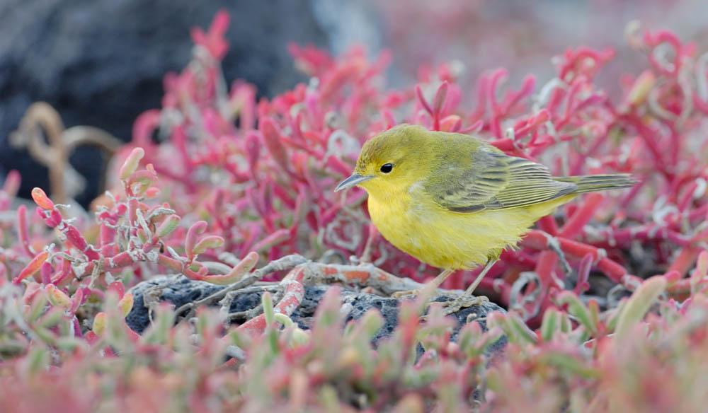 Galapagos island fauna flora sights travel adventure