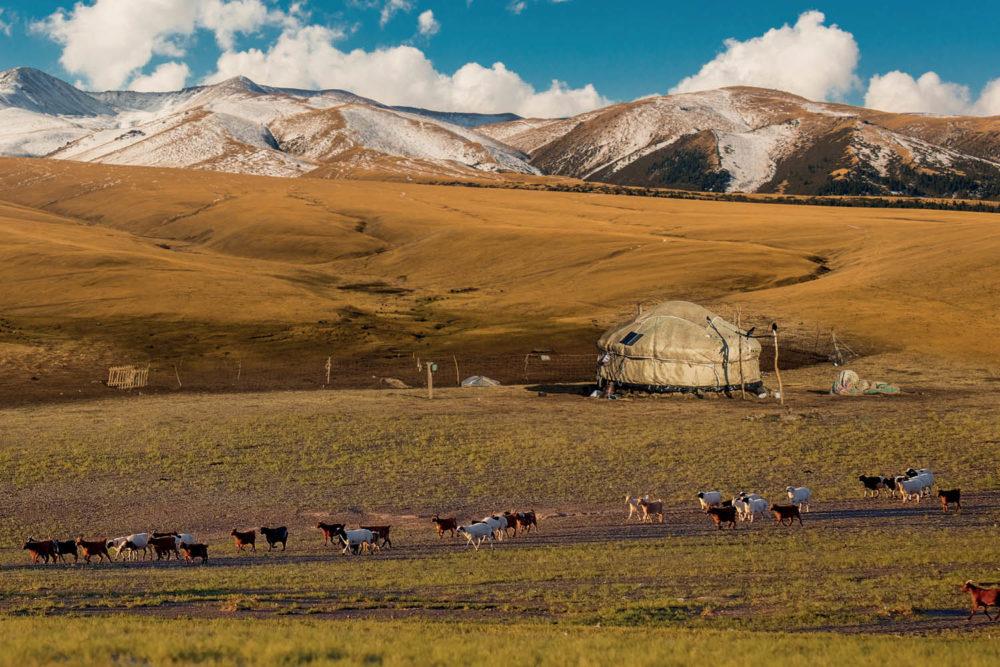 Mongolian beauty