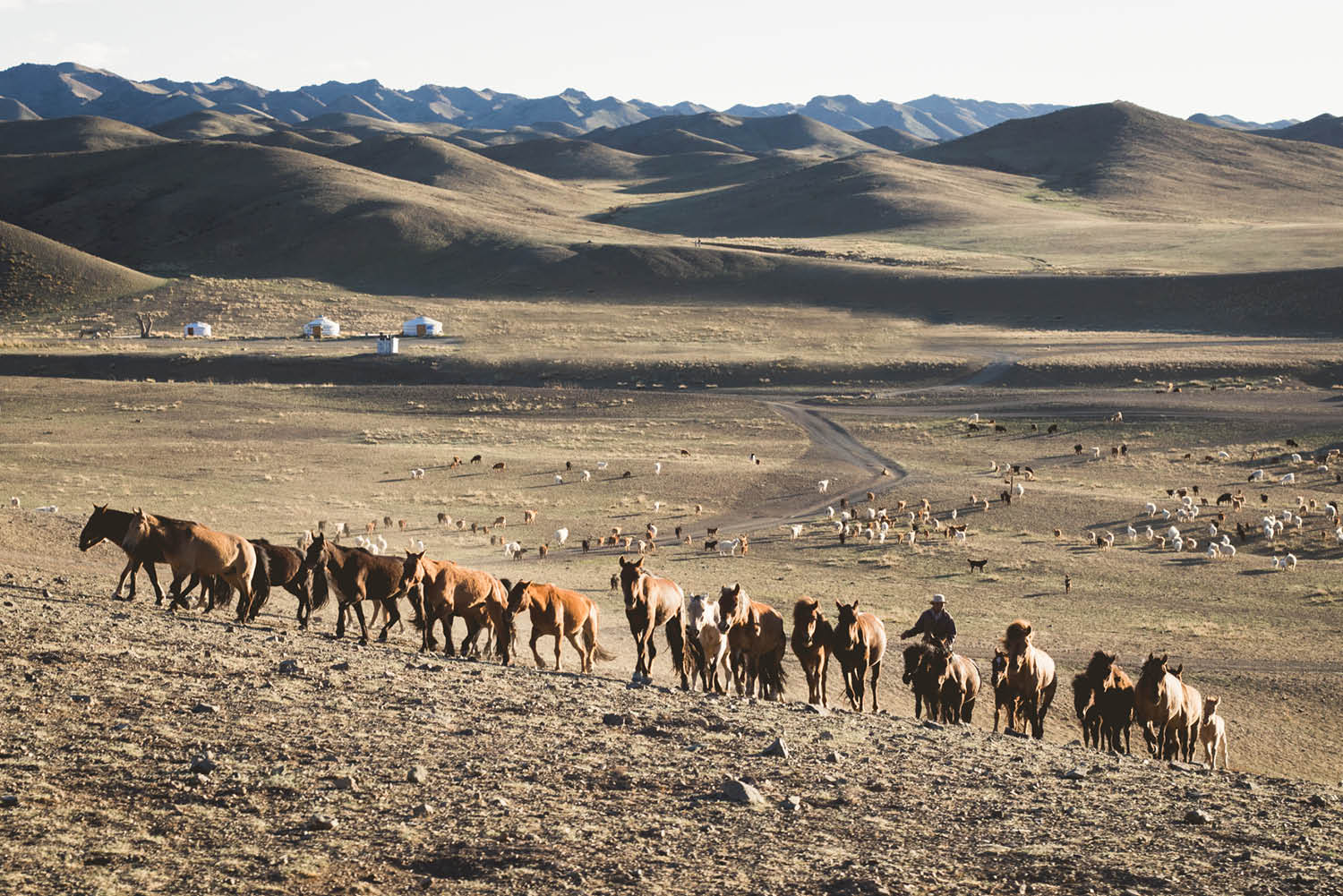 why visit mongolia horses desert culture yurt