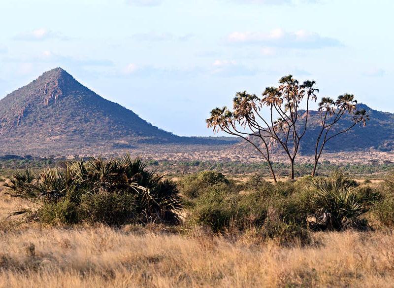 Samburu National Reserve Kenya luxury safari wildlife