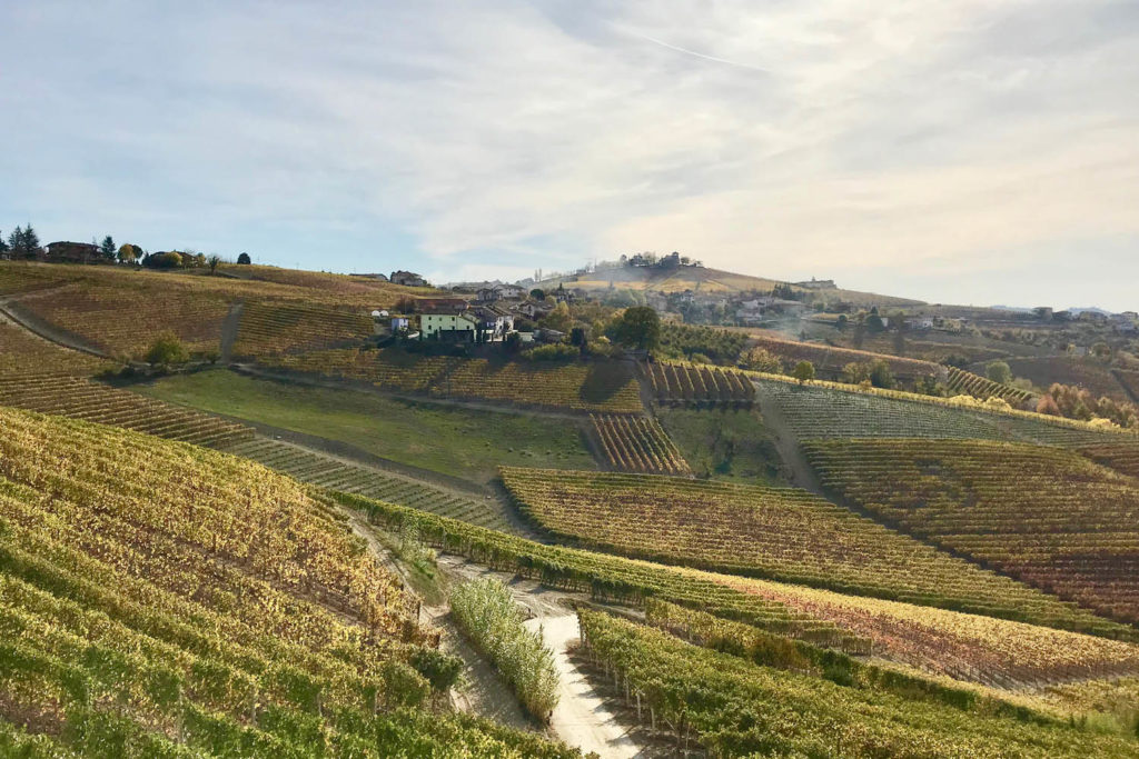 Giuseppe Cortese's winery Piemonte by van Italy