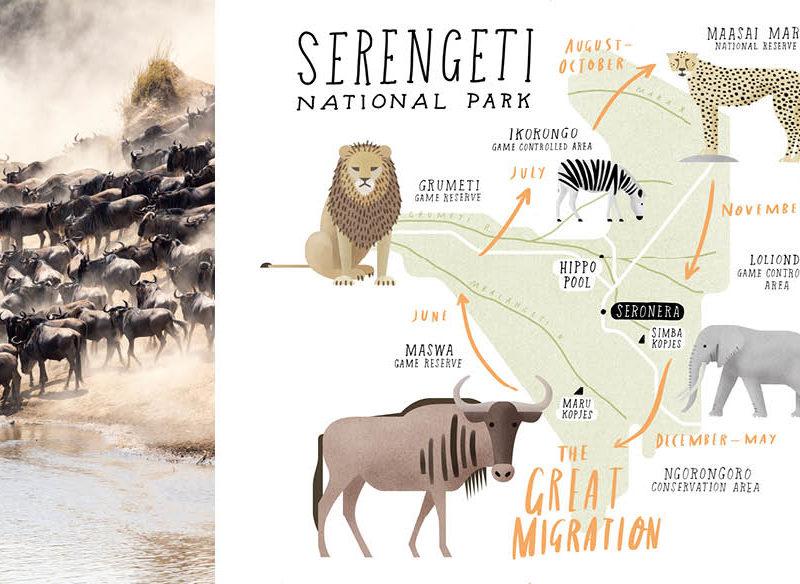 Serengeti national park Safari Tanzania Africa