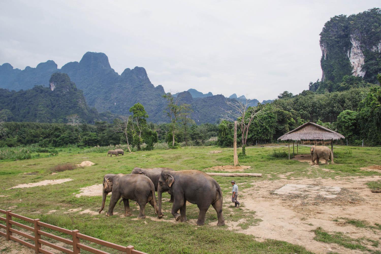 riding asian elephants hills Thailand ethics Khao Sok