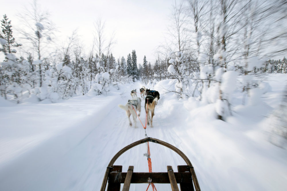 Dog sledding is a must-do winter activity in Swedish Lapland