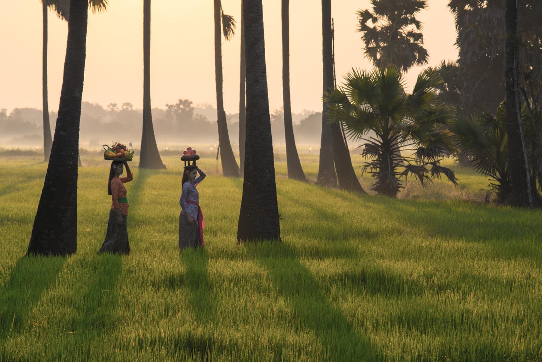Bali grass